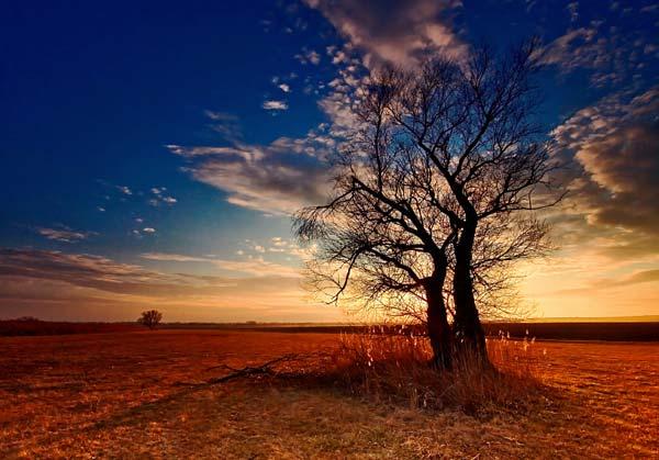 8 Красивые деревья - 28 фото