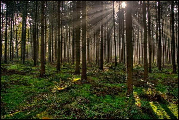 9 Красивые деревья - 28 фото