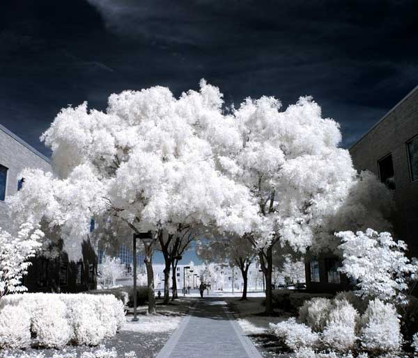 5 35 Beautiful Infrared Photos