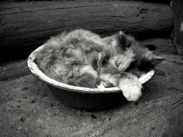 10 37 фото самых красивых кошек