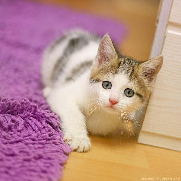 11 37 фото самых красивых кошек