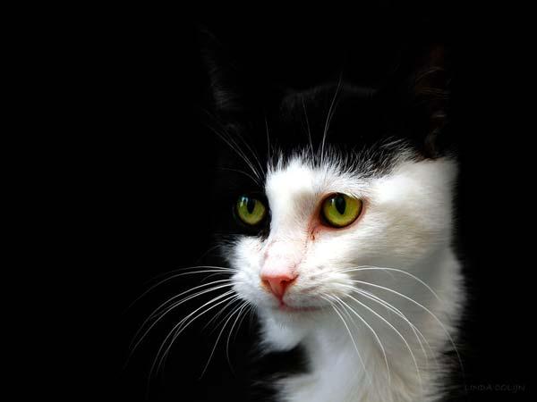 12 37 фото самых красивых кошек