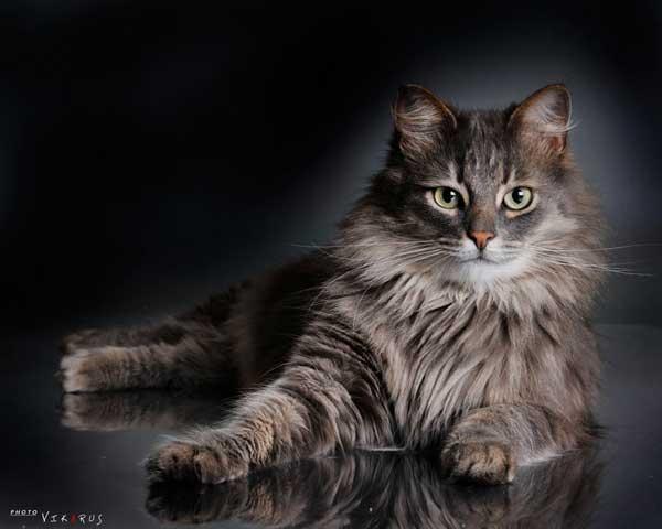13 37 фото самых красивых кошек
