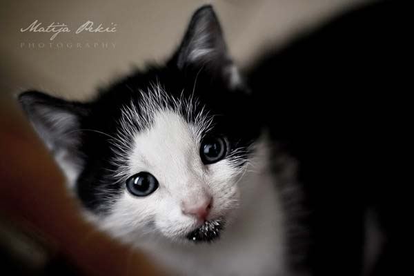 14 37 фото самых красивых кошек