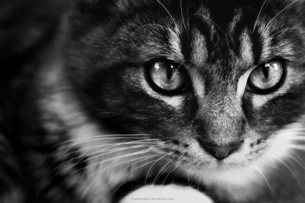16 37 фото самых красивых кошек