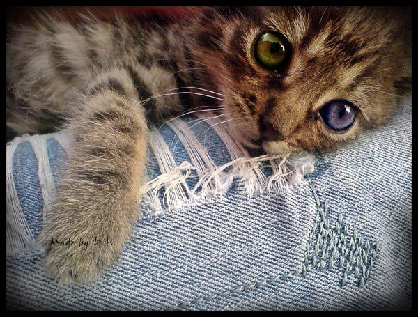 18 37 фото самых красивых кошек