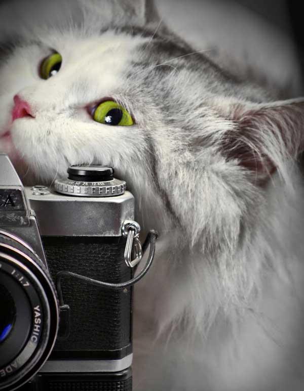 19 37 фото самых красивых кошек