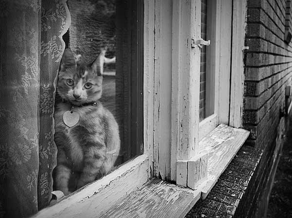 20 37 фото самых красивых кошек