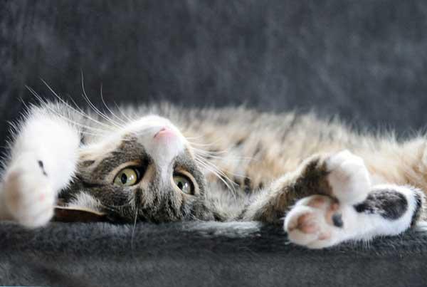 21 37 фото самых красивых кошек