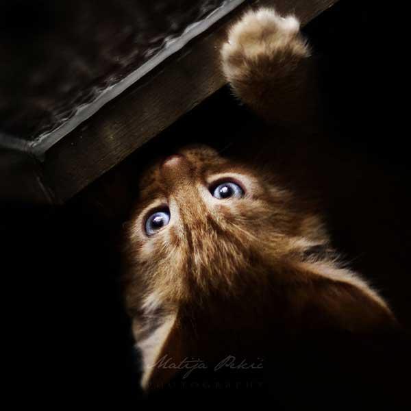 22 37 фото самых красивых кошек