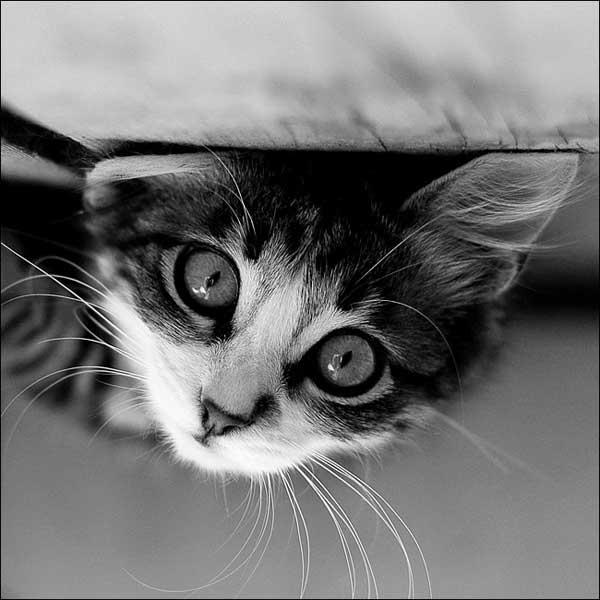 23 37 фото самых красивых кошек