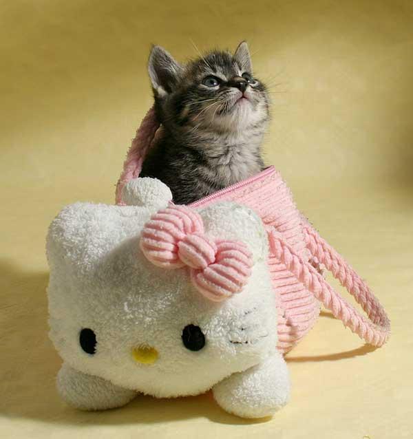 24 37 фото самых красивых кошек