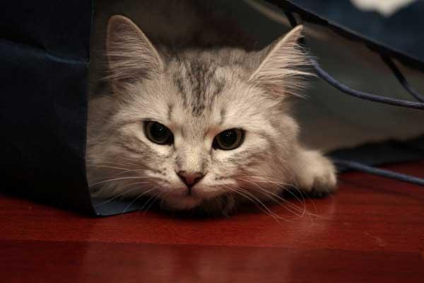 25 37 фото самых красивых кошек