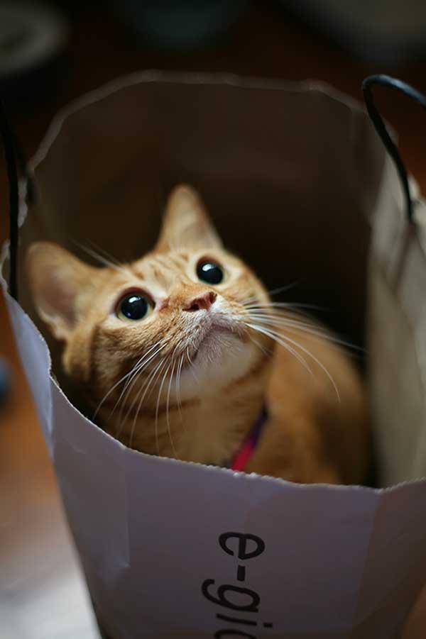 27 37 фото самых красивых кошек