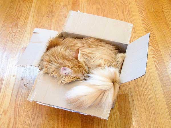 29 37 фото самых красивых кошек