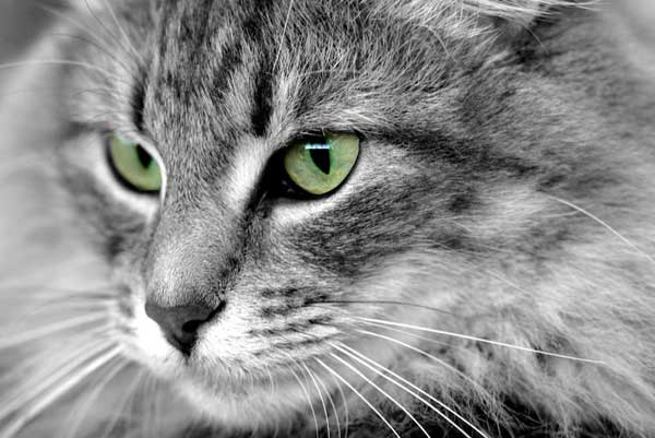 3 37 фото самых красивых кошек