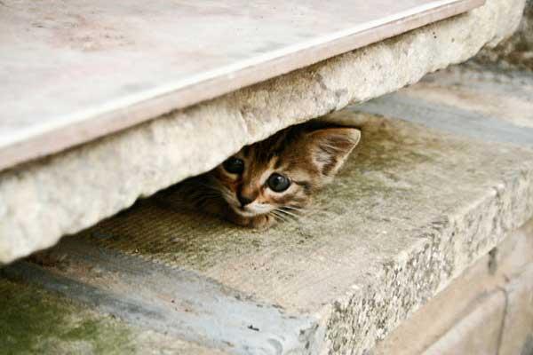 30 37 фото самых красивых кошек