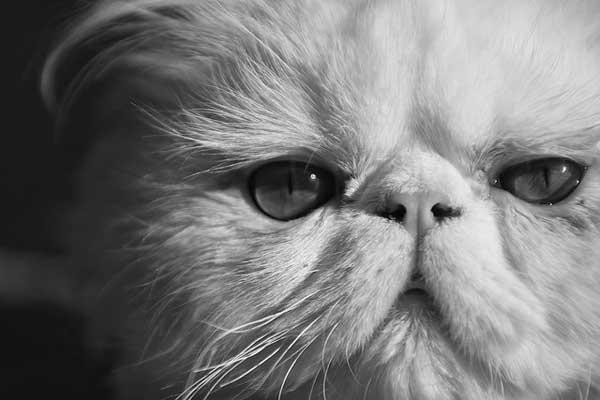 31 37 фото самых красивых кошек