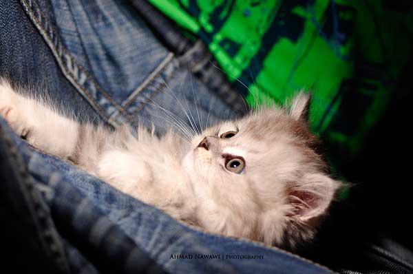 32 37 фото самых красивых кошек