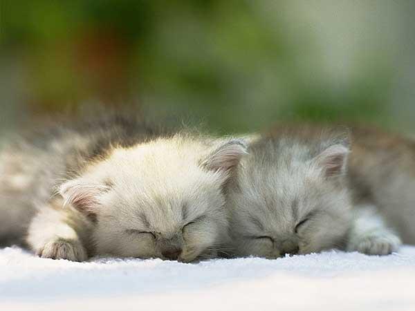 33 37 фото самых красивых кошек