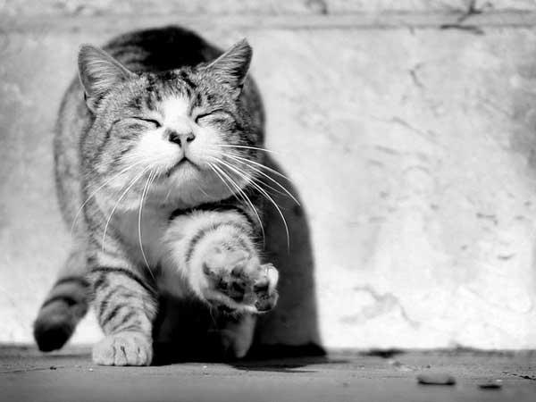 34 37 фото самых красивых кошек