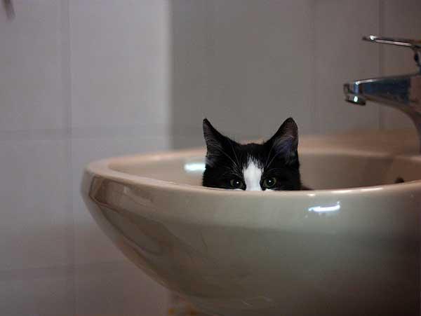 37 37 фото самых красивых кошек