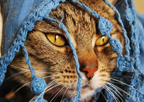 4 37 Beautiful Cat Pictures