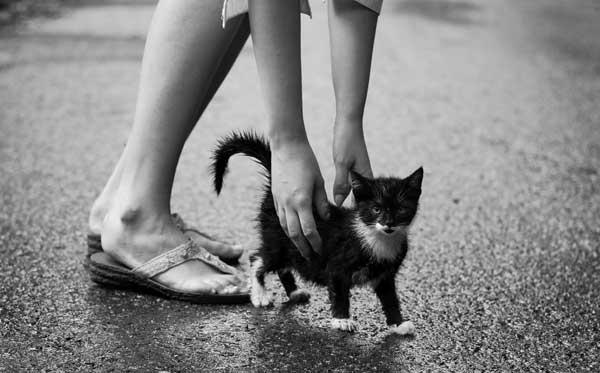 5 37 фото самых красивых кошек