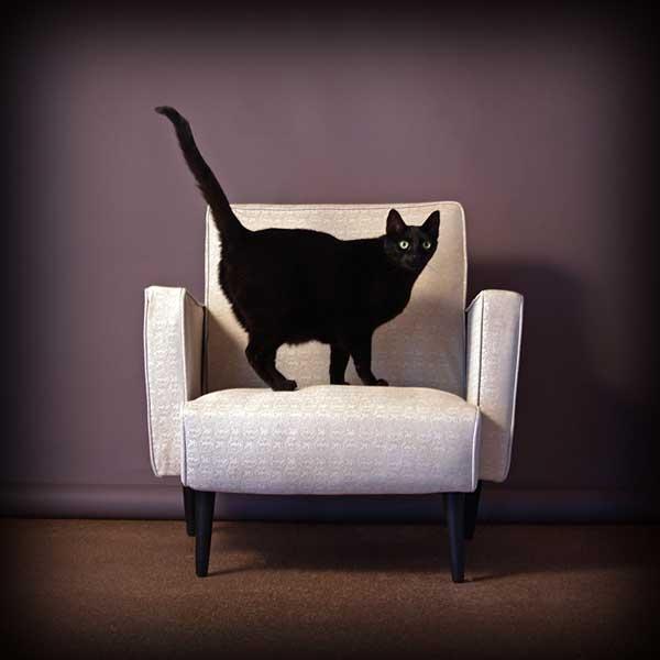 6 37 фото самых красивых кошек