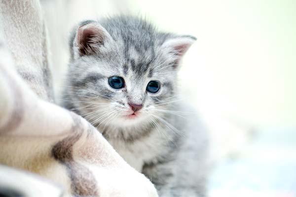 8 37 Beautiful Cat Pictures