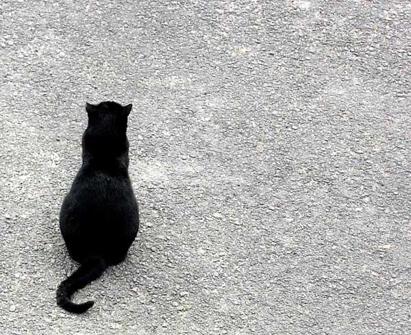 9 37 фото самых красивых кошек
